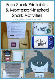 LOTS and LOTS of Free Shark Printables and Shark Activities #Montessori #preschool #homeschool