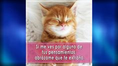 IMAGENES DE GATITOS CON FRASES DE AMOR #amor #gatos