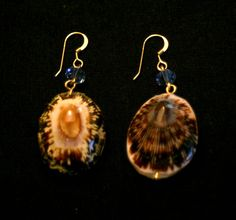 seashell earrings with swarovski crystals and gold-filled ear wire