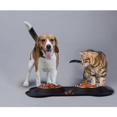 HarJue Dog Bowls Stainless Steel Dog Food Bowl Dog Water Bowls Pet Bowl with NoSpill NonSkid Silicone Mat Feeder Bowls for Dogs Cats Pets Set of 2 Bowls -- See the image web link even more details. (This is an affiliate link). Dog Water Bowls, Dog Food Bowls, Pet Bowls, Dog Feeder, Dog Food Recipes, Dog Cat, Stainless Steel, Pets, Link