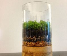"How to Make a Moss Terrarium ~ Layer from the bottom : fine gravel, activated charcoal, filter/screen such as Spanish moss or landscape fabric to keep the soil in place, cactus potting soil for good drainage, then plants. *See ""How To Collect Mosses"" from Moss & Stone Gardens : http://www.mossandstonegardens.com/blog/how-to-collect-moss/"