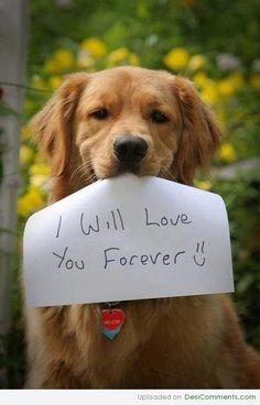 Dogs WILL love you forever. Breaks my heart that for some humans the sign would read: I might love you forever. until I find out that you actually need love, exercise and attention everyday. Then I won't love you forever and will give you away. Cute Puppies, Cute Dogs, Dogs And Puppies, Doggies, Baby Dogs, Cute Baby Animals, Animals And Pets, Animal Babies, Fluffy Animals