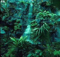 Beautiful African Rainforest/Jungle in the Congo