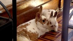 Bunnies cuddle together - July 28, 2012