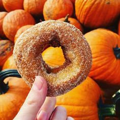 We just have one question for @idontcookijusteat. How many decorative gourds did you buy after eating your apple cider doughnut amidst the pumpkins? #BAstaff