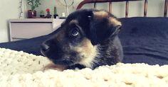 Милые щенки спорят с хозяевами