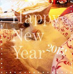 코숏 고양이 한빛군 Happy New Year