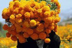 Resultado de imagen para imagenes de la flor de cempasuchil
