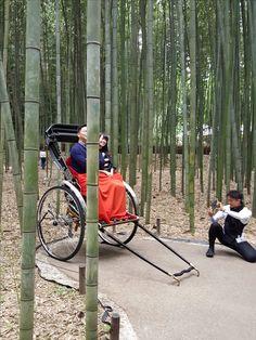 bamboo grove trishaw