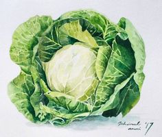 Watercolor cabbage
