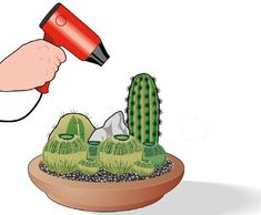 Flora Garden, Green Garden, Terrarium, Spine, Garden Care, Plantar, Cactus Plants, Bonsai, House Plants