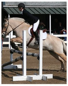 fjord horse jumping 2