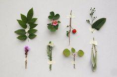 sabine timm - plants of july