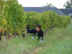 Chateau Brillette - Grand vin de Bordeaux - Moulis en Médoc