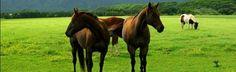 Safe haven horse rescue, Blue Creek, WV  2013