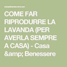 COME FAR RIPRODURRE LA LAVANDA (PER AVERLA SEMPRE A CASA) - Casa & Benessere