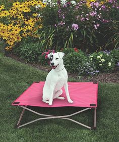 Love this Pink Fold-and-Go Elevated Pet Bed on #zulily! #zulilyfinds