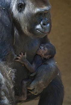 Cute Baby Animals - TWC Galleries