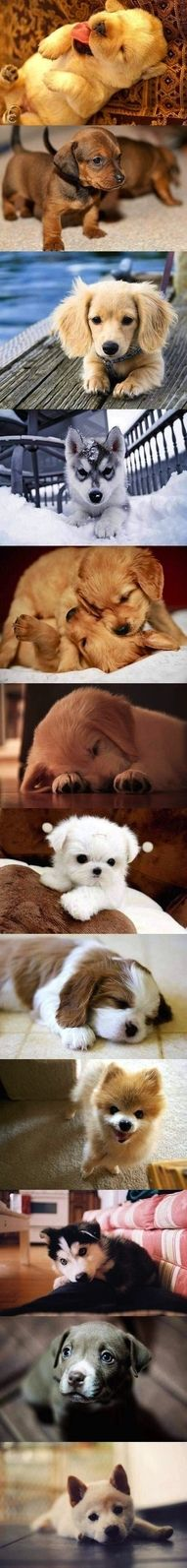 puppy love! LOVE them all!!!!