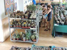 Regionális kaktusz és más pozsgás növények kiállítása és vására 2020 Bogács - Programturizmus
