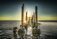 FORGOTTEN PIER / Up close shot of the broken and decaying pier near St. Marks Lighthouse. The golden sunset broke slightly through the old pilings and created a glow against the rim of the oyster beds that were slowly consuming this forgotten ocean walkway into the sea. / ©2014 Tedon Porter & A Traveler's Focus - Creative Commons Non-Commercial