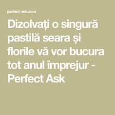 Dizolvați o singură pastilă seara și florile vă vor bucura tot anul împrejur - Perfect Ask