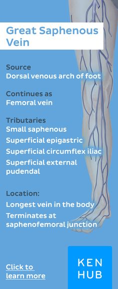 The great saphenous vein is a large superficial vein of the lower limb and drains into the femoral vein. Pin our #veinfacts !