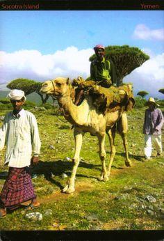 See 3 photos from 35 visitors to Summerland Hotel, Hadibu, Socotra, Yemen. Socotra, Postcards, Camel, World, Animals, Animales, Animaux, Animal, Animais