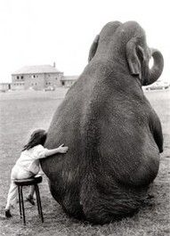 Become friends with an elephant ; as long as its not in a room ! ;)