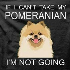 Funny, right? Well, it's not. IT'S THE PURE TRUTH!!! I would die if I couldn't take my pom with me.