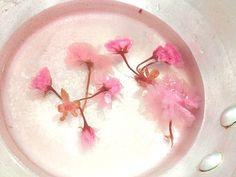 桜のゼリー試作中