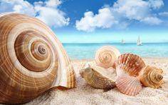 Grande Abstracta Moderna de la Lona Impresiones de Conchas de Playa Blanca de Arte Pinturas Al Óleo sobre Lienzo Arte de La Pared Decoración Del Hogar Sala de estar