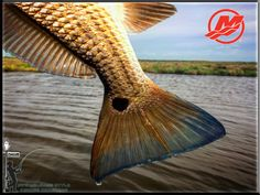 New Orleans Fishing  with Capt Jason Shilling/ New Orleans Fishing report 5/11/16