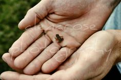 Tiny Frog Photo Print by alenarosephotography on Etsy, $25.00
