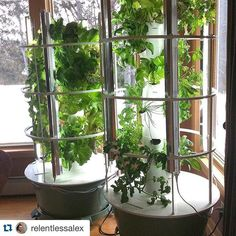 Do you plan to grow indoors this winter?  #towergarden photo by @relentlessalex. #indoorgarden #growyourown #gardening by towergardenofficial