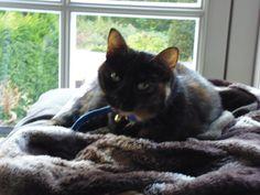 Kitty Kat | Pawshake
