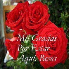 Rosas Lindas Mil Gracias por Estar Aquí, ¡Besos! - Imagenes con Frases, Fotos y Carteles para Compartir