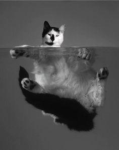 Swimming?!!  cat   float   floating   swim   black & white   www.republicofyou.com.au