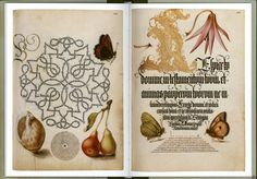 Mira-calligraphiae-monumenta-24 - La boite verte