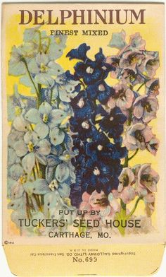 Vintage Flower Seed Packet Tuckers Seed House Lithograph DELPHINIUM