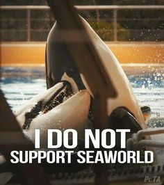 End the marine entertainment of Dolphins, Orcas, etc., and I will support SeaWorld completely. - Wildlife Earth on Pinterest.