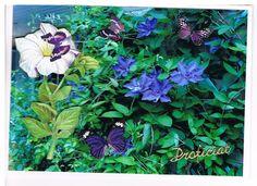 foto uit eigen tuin met 3D