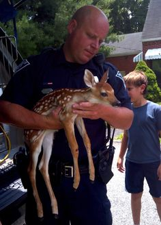 Animal Control Officer Ayers helps rescue an injured fawn in Staunton, Virginia