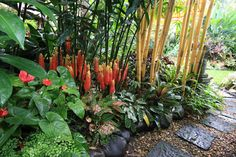 Tropical Garden - cascading over the rocks. So much color, shape & texture! Love it.