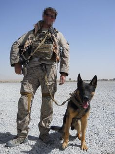 Belgian Malinois Navy Seal : belgian, malinois, Ideas, Dogs,, Military, Working