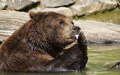 Unsere Vorfahren mussten sich ganz schön in Acht nehmen, vor allem vor Bären. Der Bärenkult erinnert uns an die Jagdmagie unserer Vorfahren, ebenso wie das Symbol des Bären in verschiedenen Landeswappen. Heute dienen diese Tiere und ihre Symbole als Kinderspielzeug, Zoo-Tiere und Maskottchen.  https://www.frage-antwort-storytelling.de/a-z/teddybaer-grizzly-eisbaer/