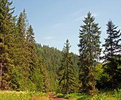 Tentokrát moju zvedavosť pritiahol horský kvietok – no teda, ak sa kvietkom dá nazvať niečo, čo dorastie do dvoch metrov a má tomu primerané meno – udatník. Udatník lesný (Aruncus Sylv… Mountains, Nature, Travel, Naturaleza, Viajes, Traveling, Natural, Tourism, Scenery