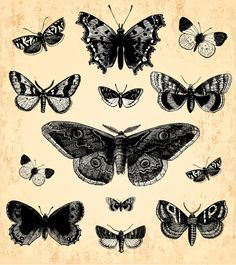 Hand drawn vintage butterflies vectors set 05
