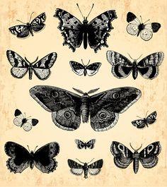 Hand drawn vintage butterflies vectors set 05