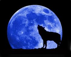 Blue moon. Night for wolves.